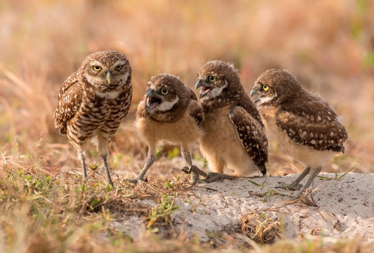 2017-Comedy-Wildlife-Photography-Awards-Final-40-2