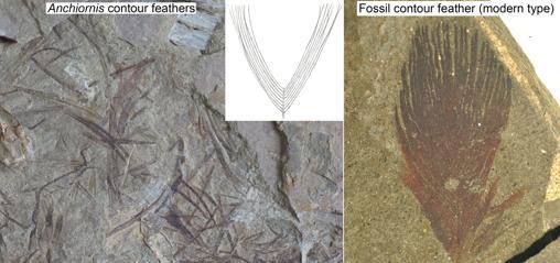 plumas dinosaurio.jpg