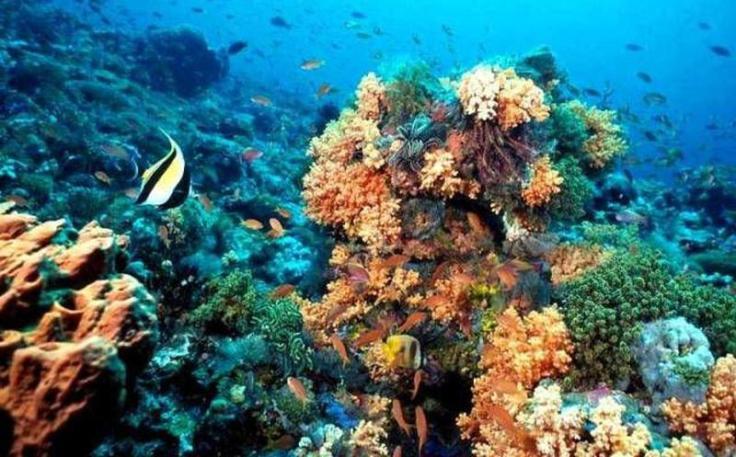 coral mexicano
