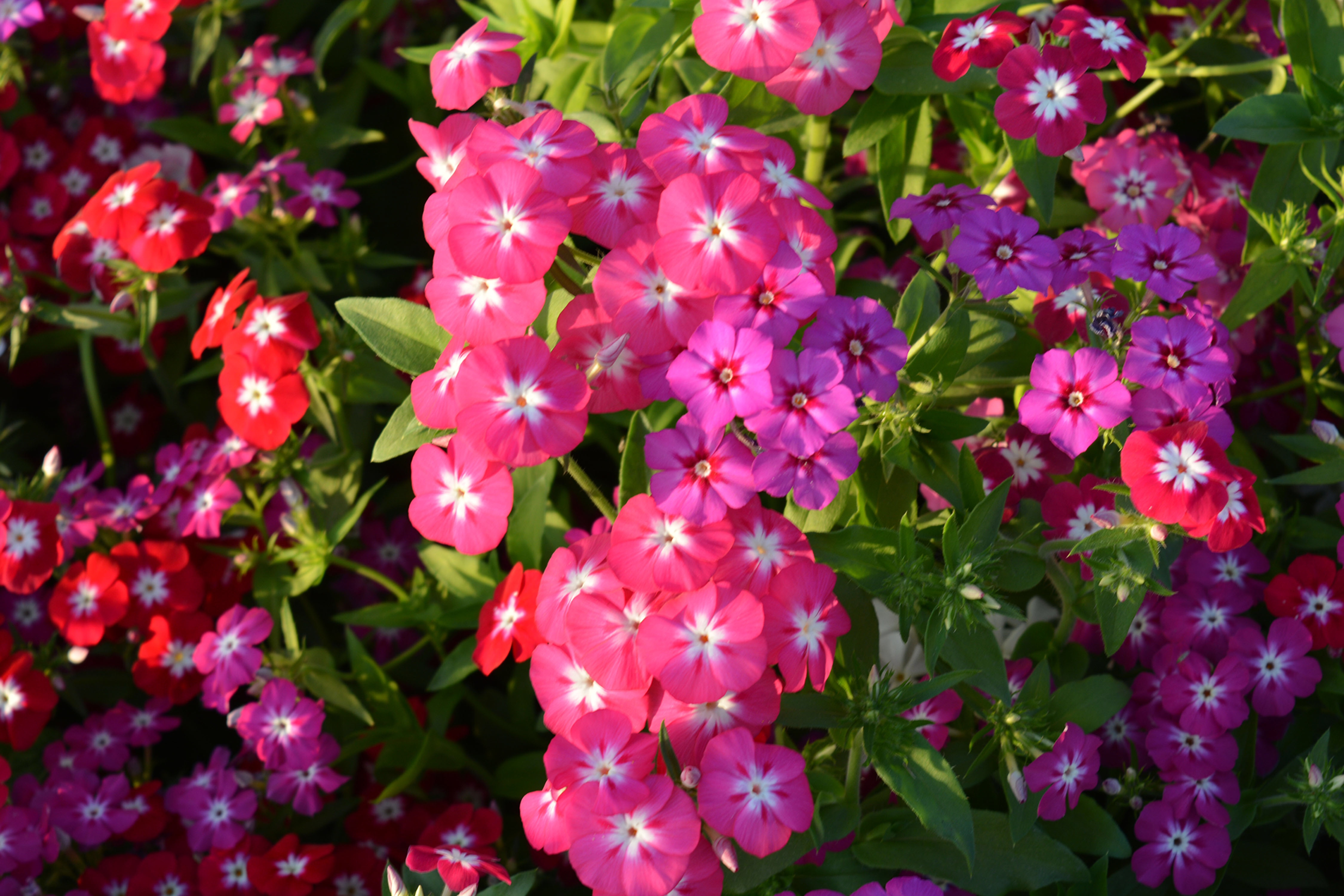 Flor exótica