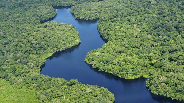 Vista aerea Amazonas, cerca de Manaus