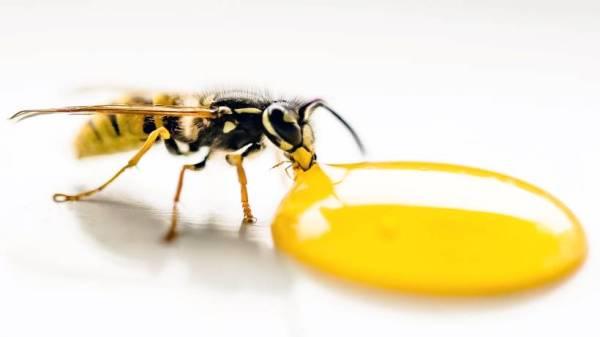 que pasaria si las abejas desaparecieran